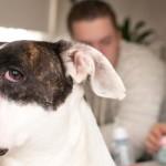 Você sabia que os cães também sentem ciúmes?