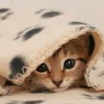 Dormir em ambientes frios queima mais calorias do que nos aquecidos