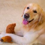 5 razões pelas quais amamos nossos cães