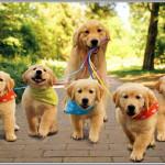 Fidelidade canina: cães rejeitam pessoas que são hostis com seus donos